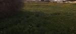 farmhouse-in-mqabba